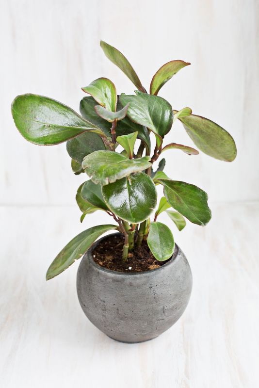 Image gallery low maintenance indoor plants for Indoor plant maintenance